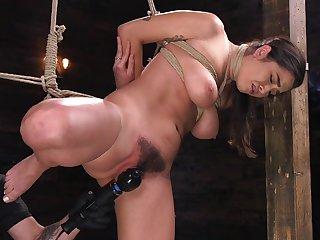 Poikilothermal bondage for busty Karlee Grey